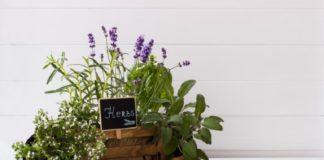 Herb Garden Tips labeling